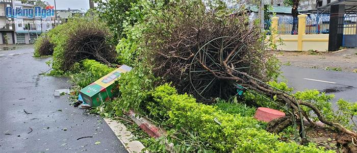 Hàng loạt cây hoa giấy của công ty môi trường trên đường Phan Bội Châu cũng bị gãy